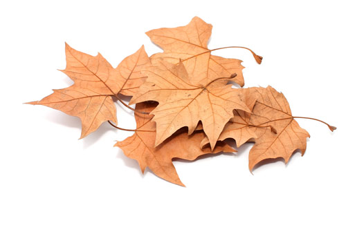 feuilles automne hiver