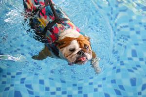 Chien dans une piscine